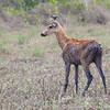 20Sep19a Pantanal 056