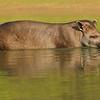 27Sep19a Pantanal 476