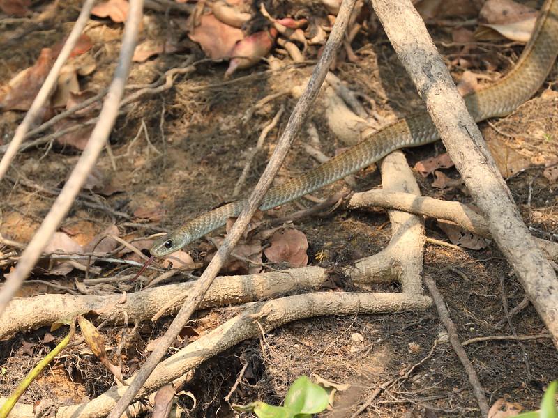 21Sep19 Pantanal 384