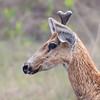 20Sep19a Pantanal 056portrait