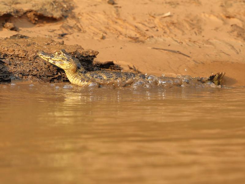 24Sep19b Pantanal 113