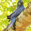 28Sep19a Pantanal 093