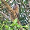21Sep19 Pantanal 586