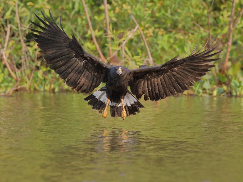21Sep19 Pantanal 525