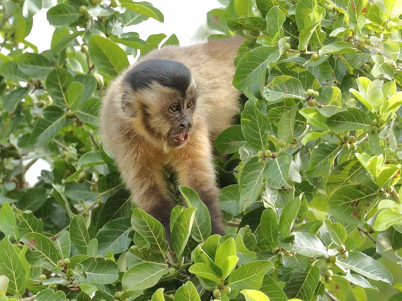 23Sep19a Pantanal 246