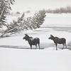 5Feb20 Yellowstone 056