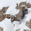 6Feb20a Yellowstone 029 (2)