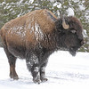 7Feb20 Yellowstone 057