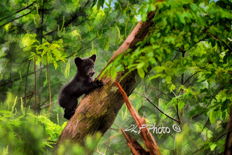 """Black bear climbing in tree and looking around  - artistic<br /> <br /> to purchase - <a href=""""http://dan-friend.artistwebsites.com/featured/black-bear-cub-climbing-in-tree-and-looking-around-artistic-dan-friend.html"""">http://dan-friend.artistwebsites.com/featured/black-bear-cub-climbing-in-tree-and-looking-around-artistic-dan-friend.html</a>           .................................................................pixel paintography"""