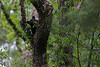 Black bear cub eating leaves .......................................Prints or digital files can be purchased by e mailing DFriend150@gmail.com