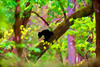 Black bear cub in forest   paintography