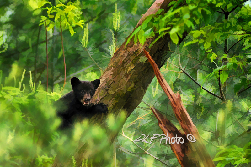 """Black bear cub in tree  - artistic<br /> <br /> to purchase - <a href=""""http://dan-friend.artistwebsites.com/featured/black-bear-cub-in-tree-artistic-dan-friend.html"""">http://dan-friend.artistwebsites.com/featured/black-bear-cub-in-tree-artistic-dan-friend.html</a>           .................................................................pixel paintography"""