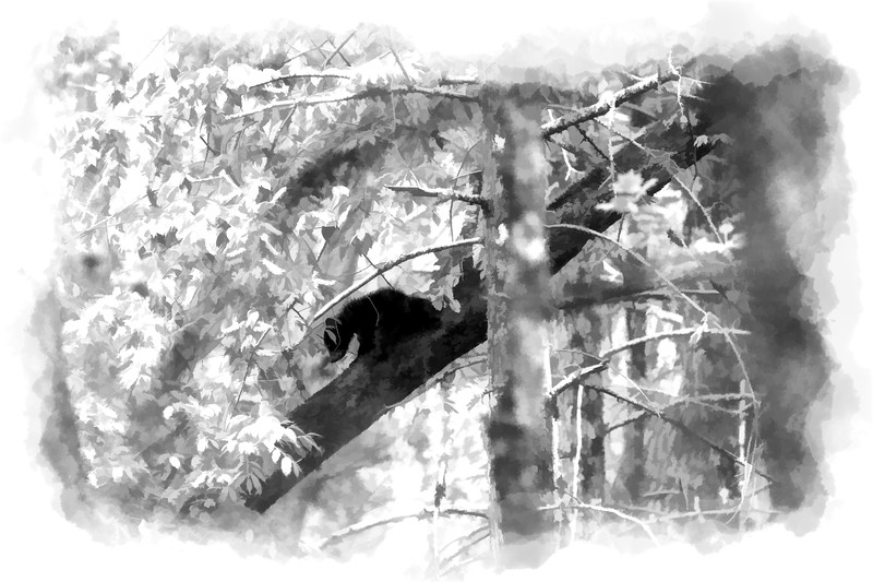 Black bear cub in tree paintography