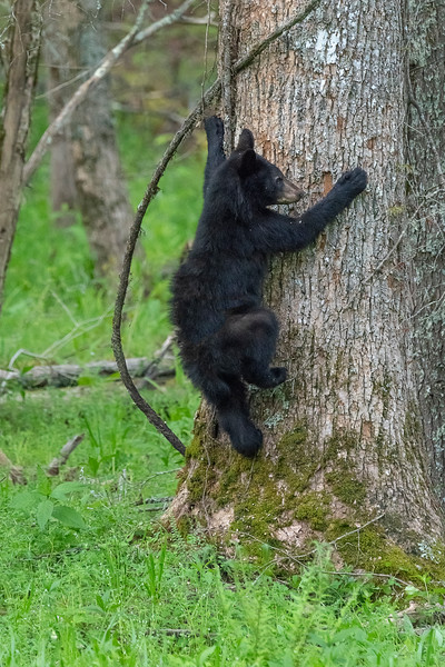 Up the tree I go
