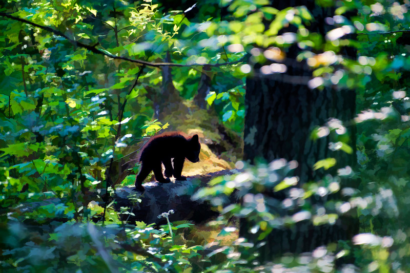 Black bear cub heading back into the forest    paintography