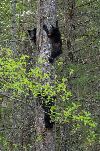 Up the tree