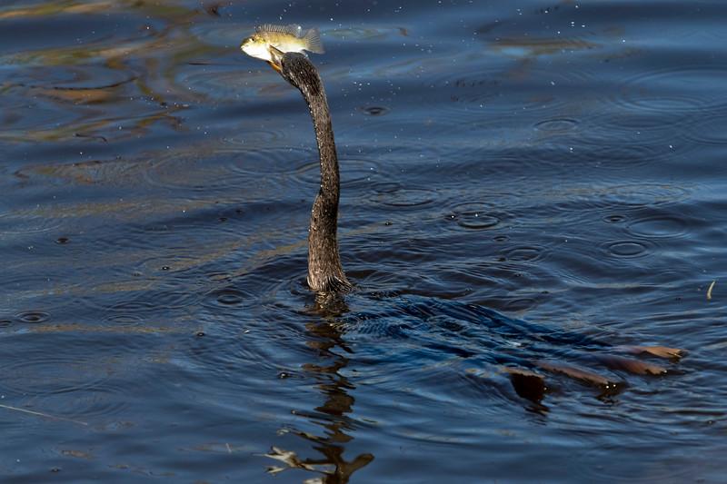 Expert fisher bird
