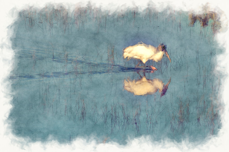 Wood Stork wading in water searching for food - paintography