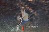 "Mallard Ducktake Off<br /> <br /> Framed, metal, canvas order at this website - <a href=""http://fineartamerica.com/featured/mallard-ducktake-off-dan-friend.html"">http://fineartamerica.com/featured/mallard-ducktake-off-dan-friend.html</a>           .................................................................pixel paintography"