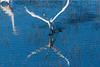 Graceful bird ruffed feathers