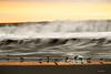 """sandpipers feeding in front of wave<br /> <br /> to purchase - <a href=""""http://dan-friend.artistwebsites.com/featured/sandpipers-feeding-in-front-of-waves-dan-friend.html"""">http://dan-friend.artistwebsites.com/featured/sandpipers-feeding-in-front-of-waves-dan-friend.html</a>           .................................................................pixel paintography"""