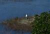 Wood stork n land