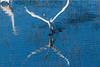 Graceful bird flying in