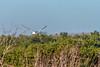 Tern flying high