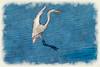 White egret landing -  paintography