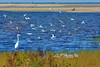 """Birds frenzy feeding in bay<br /> <br /> to purchase - <a href=""""http://dan-friend.artistwebsites.com/featured/feeding-frenzy-dan-friend.html"""">http://dan-friend.artistwebsites.com/featured/feeding-frenzy-dan-friend.html</a>           .................................................................pixel paintography"""