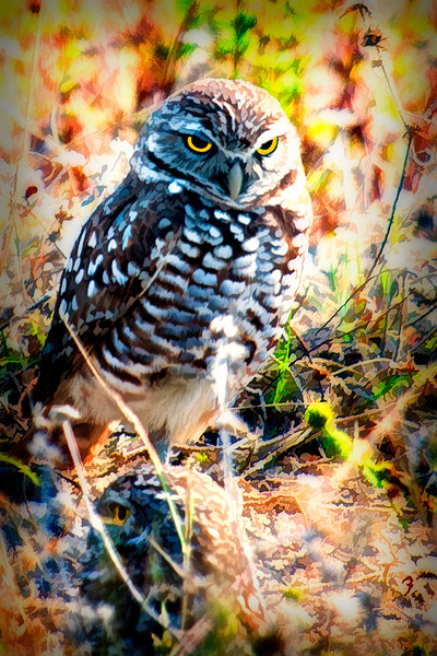 "The Burrowing Owl is a small, pint-sized bird that lives in open, treeless <br /> <br /> to purchase - <a href=""http://dan-friend.artistwebsites.com/featured/the-burrowing-owl-with-atitude-dan-friend.html?newartwork=trueareas"">http://dan-friend.artistwebsites.com/featured/the-burrowing-owl-with-atitude-dan-friend.html?newartwork=trueareas</a>..........................           .................................................................pixel paintography"