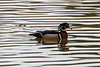 Wood ducks in water