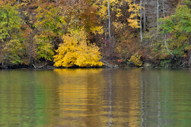 Yellow tree on the water