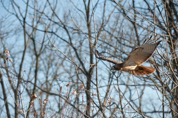 Flying between tree limbs