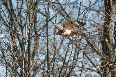 Flying between tree limbs