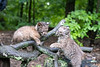 Two baby bobcats play fighting on tree limb