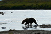 """silhouette of brown bear........................to purchase - <a href=""""http://bit.ly/1pFJYdE"""">http://bit.ly/1pFJYdE</a>"""