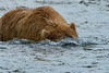 """brown bear submarine...................to purchase - <a href=""""http://bit.ly/1uhZr34"""">http://bit.ly/1uhZr34</a>"""