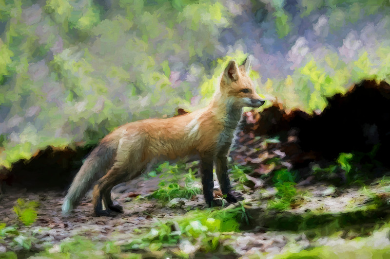 Paintography Red fox standing straight