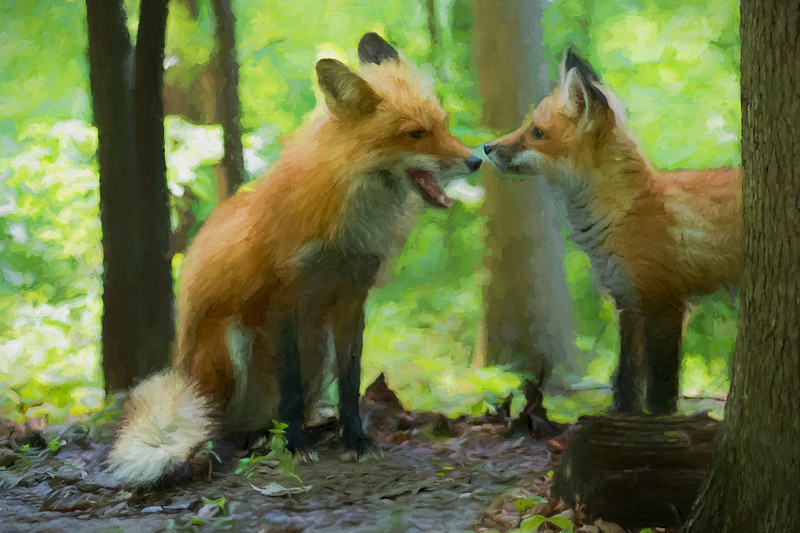Paintography red fox and his kit