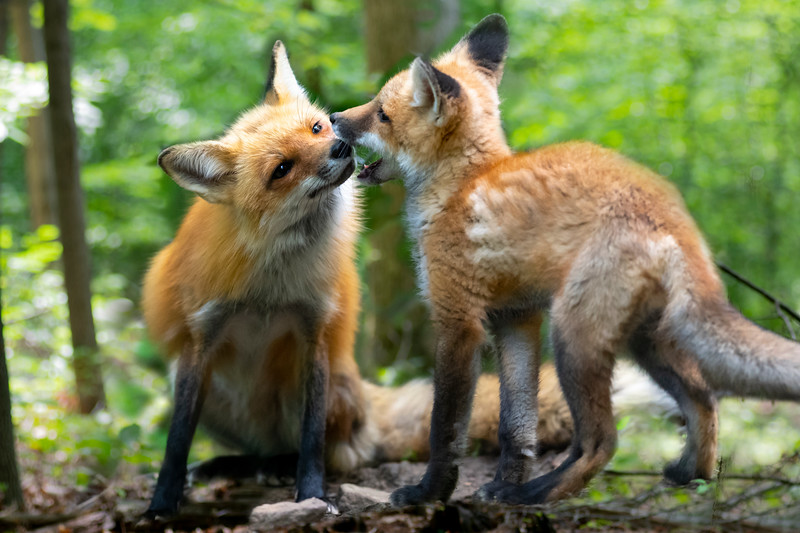 Playful kissing