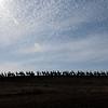 Silhouette  Sandhills Crane birds in hill