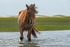 Pretty mare in the water