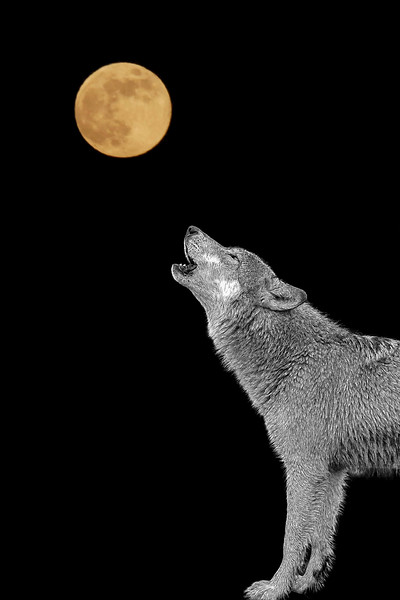 Bark at the moon - paintography