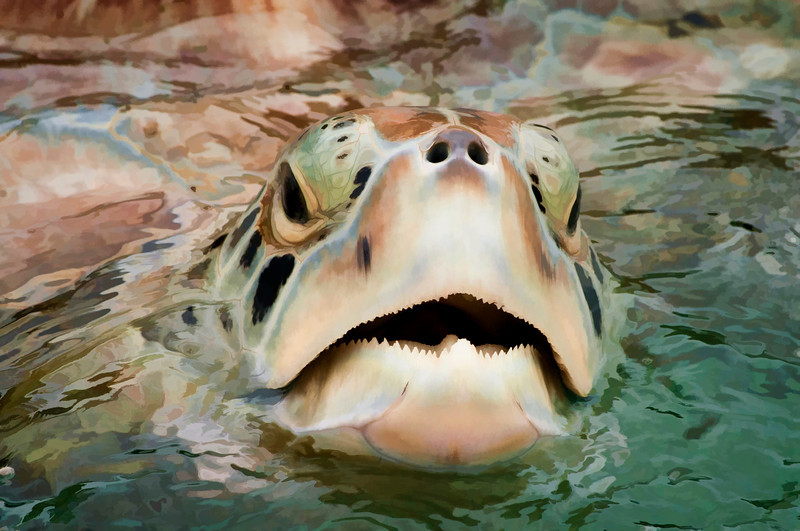 """Sea Turtle poking head out of water............................to purchase - <a href=""""http://bit.ly/1gAKq46"""">http://bit.ly/1gAKq46</a>"""