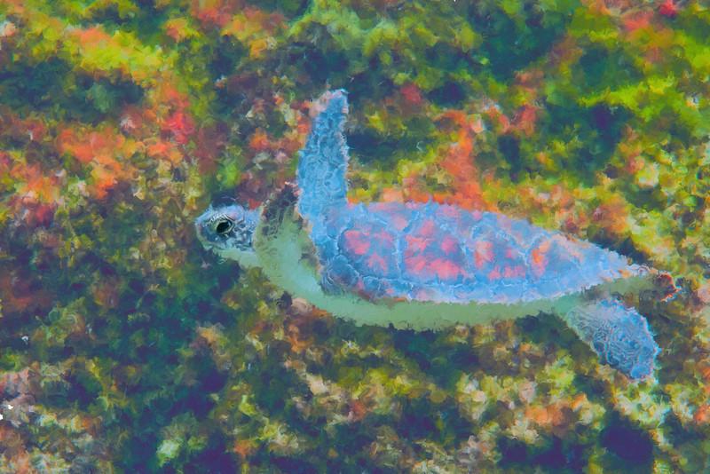 Photo impression of sea turtle................................top purchase - htpp://bit.ly/1v0JUWh