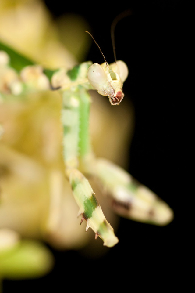 Close up of exotic stick insect.