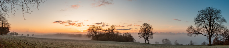 2019 - Foggy dawn on the Penshurst Estate 010.jpg