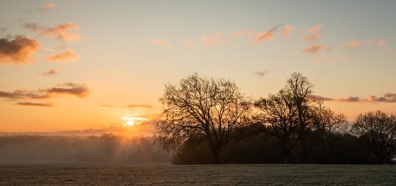 2019 - Foggy dawn on the Penshurst Estate 015.jpg