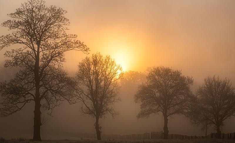 2019 - Foggy dawn on the Penshurst Estate 024.jpg
